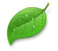 Coda-Leaf
